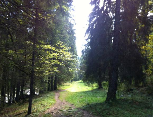 gehende-meditation-32-579x446